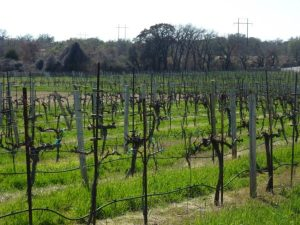 la-buena-vida-vineyard-600x450