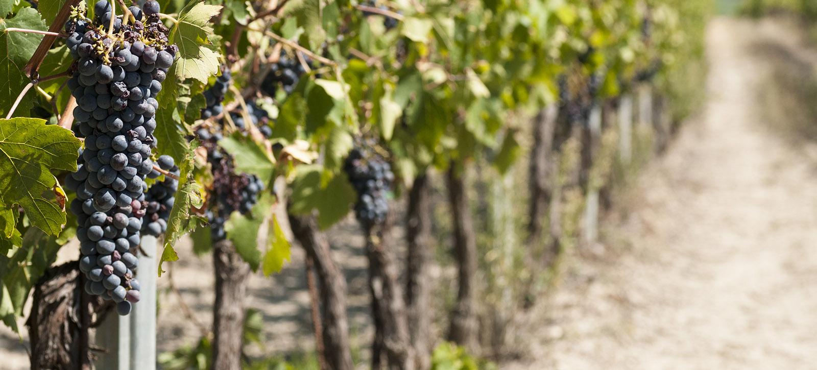 Umbra Wines